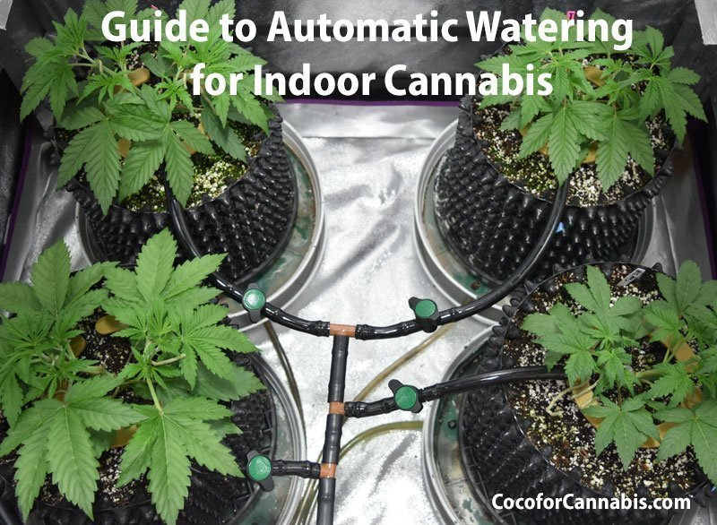 Automatic watering system for growing cannabis in coco with high frequency fertigation