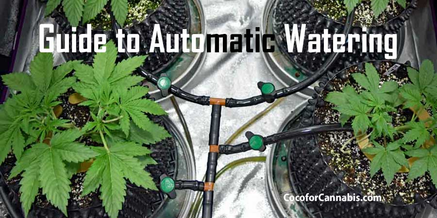 How to water cannabis in coco automatic watering