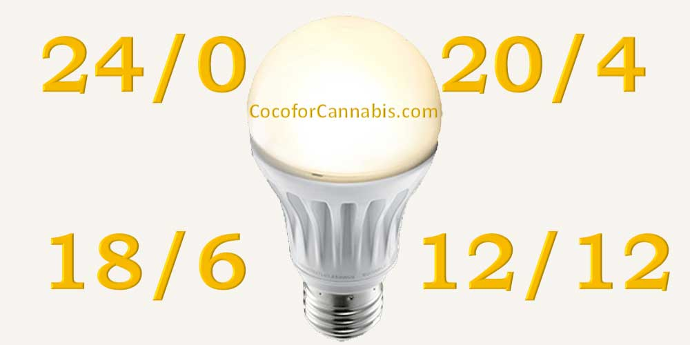 Cannabis Light Cycle