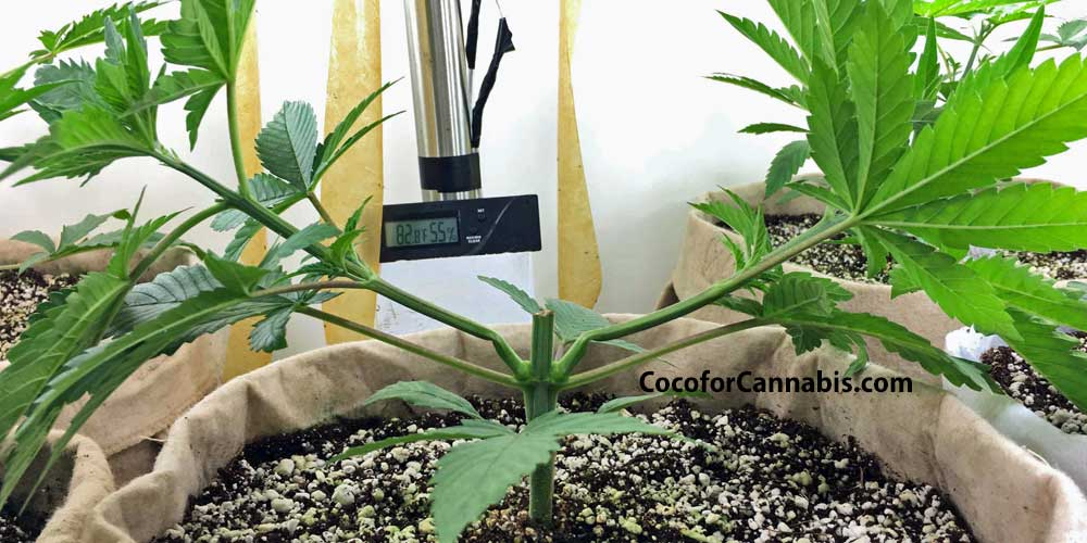 Why Train Cannabis