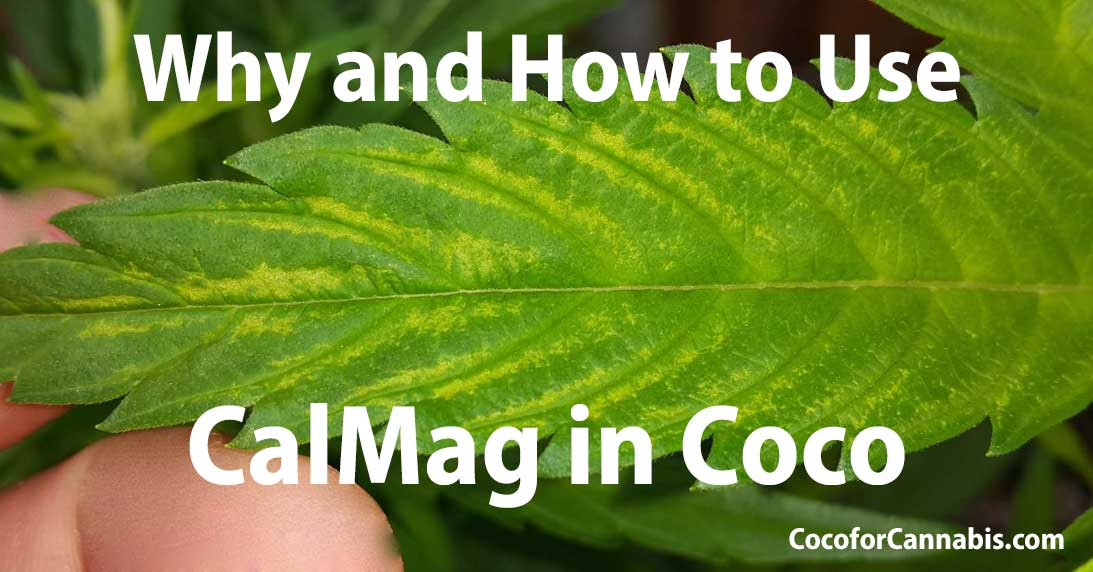 Why & How to Use CalMag in Coco - Cal Mag Deficiency - Coco