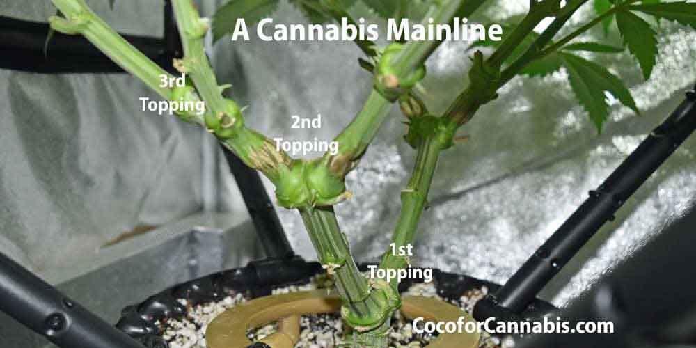 A Cannabis Mainline