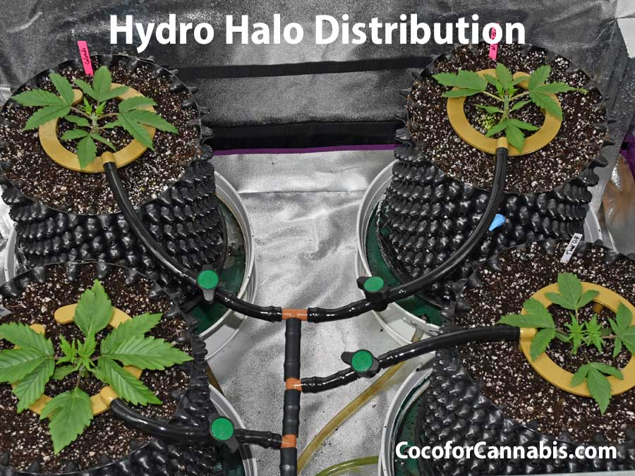 Guide to automatic watering for indoor cannabis hydro halo system