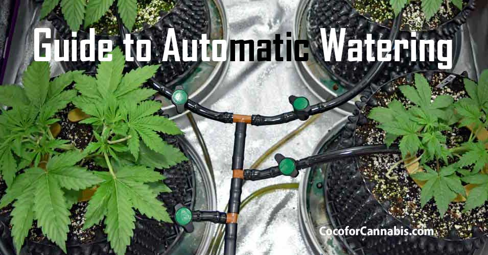 Guide to Automatic Watering for Indoor Cannabis -Watering
