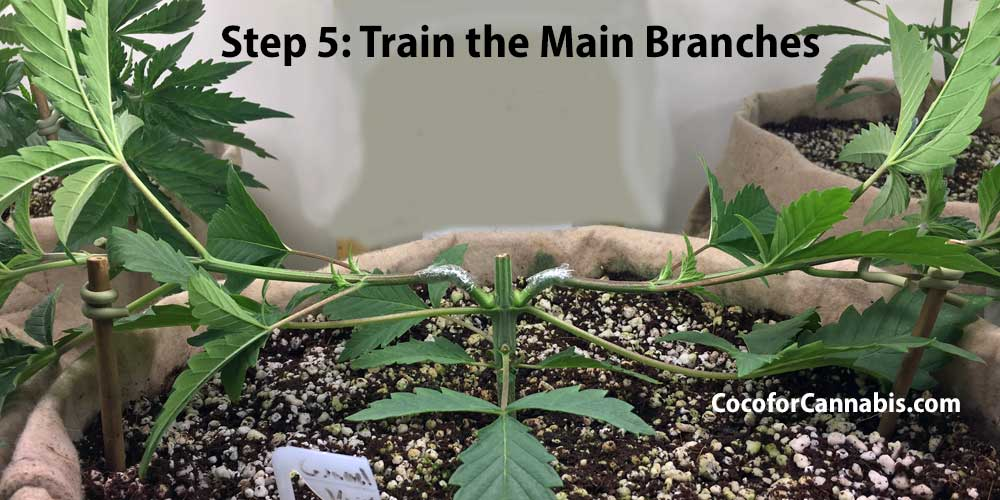 Cannabis Manifold Training Step 5