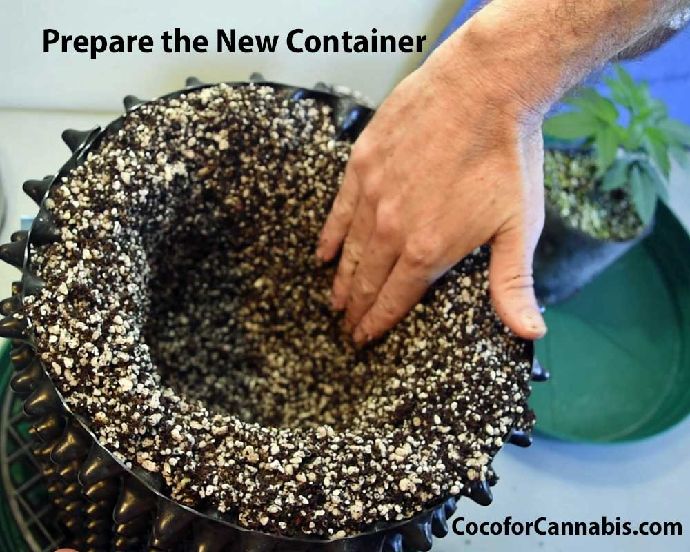 Transplanting prepare the container