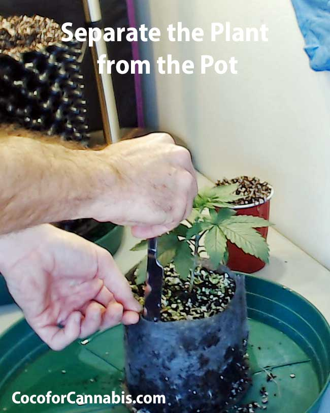 Cut roots from fabric pot