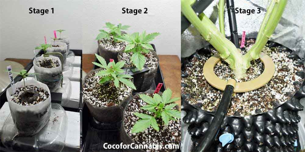 Transplanting Cans Plants Why