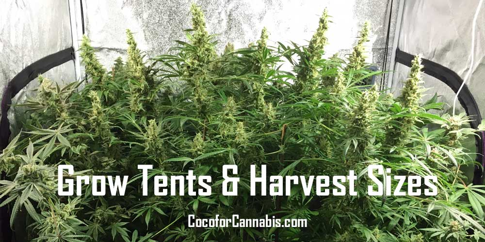Grow-Tents-and-Harvest-Sizes