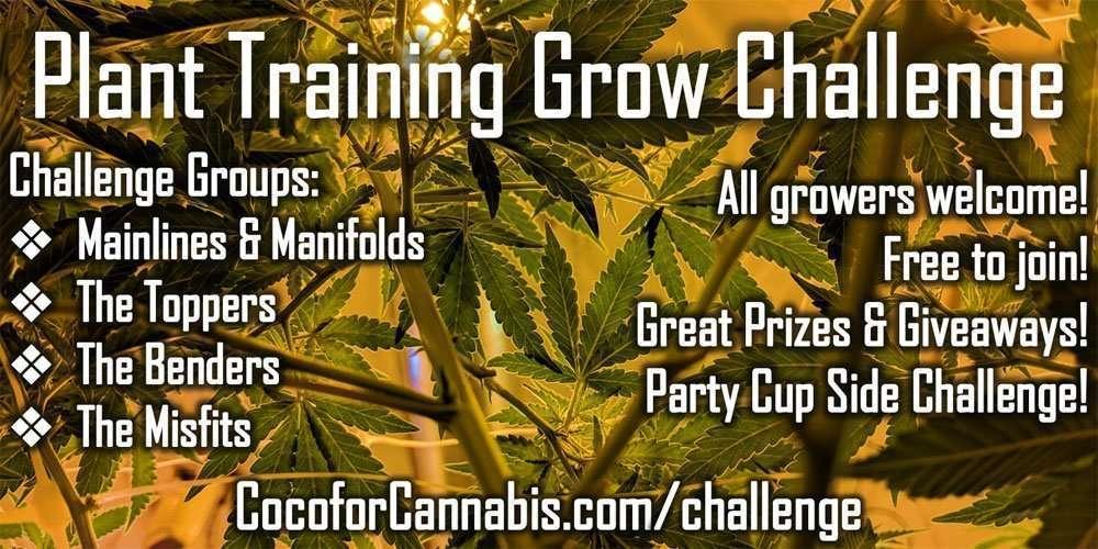 Plant Training Grow Challenge