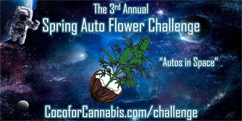 Spring Auto Flower Challenge