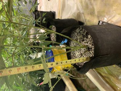 Cannabis Grow 763AA217 B97B 4ED5 883B 0A46F18B5CCC