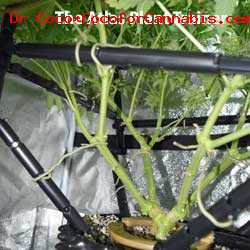 Cannabis Grow APT Product4