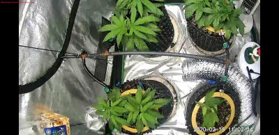 Cannabis Grow Screenshot 20200215 110216 Wyze
