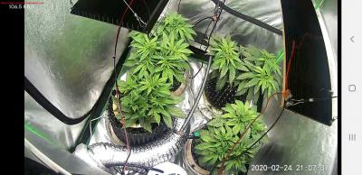 Cannabis Grow Screenshot 20200224 210737 Wyze
