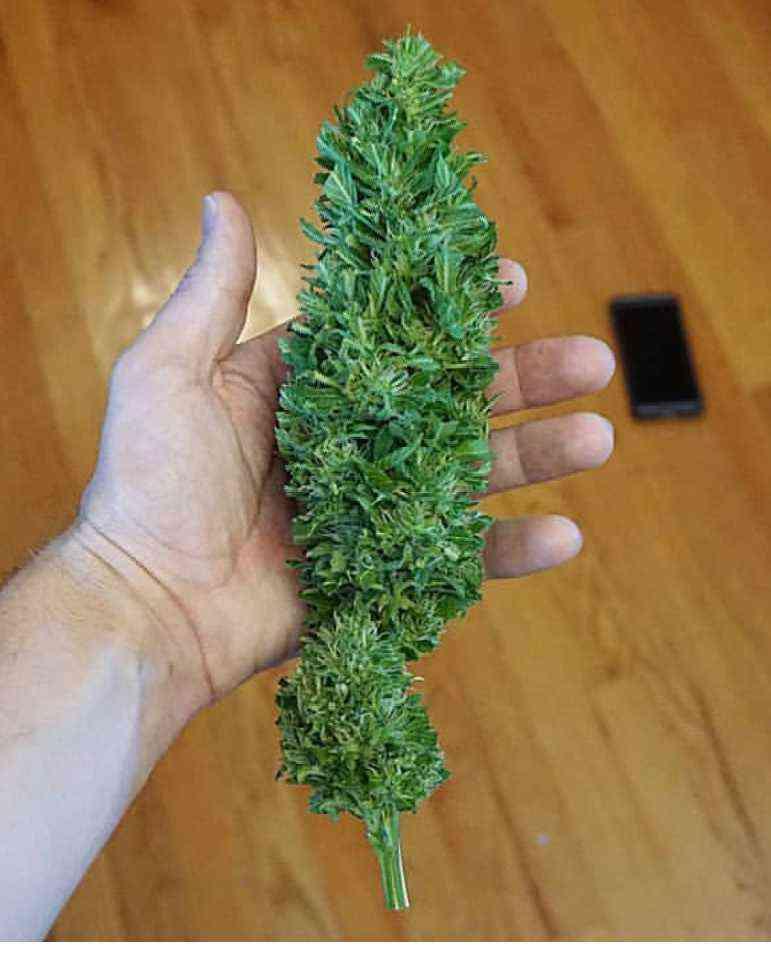 Cannabis strain review :