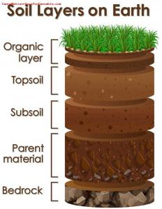 Cannabis Grow Soil Layer