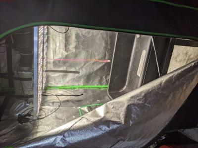 Cannabis Grow Open Tent