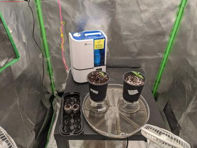 Cannabis Grow Day 11   Overview