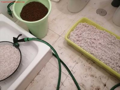 Cannabis Grow washing rocks