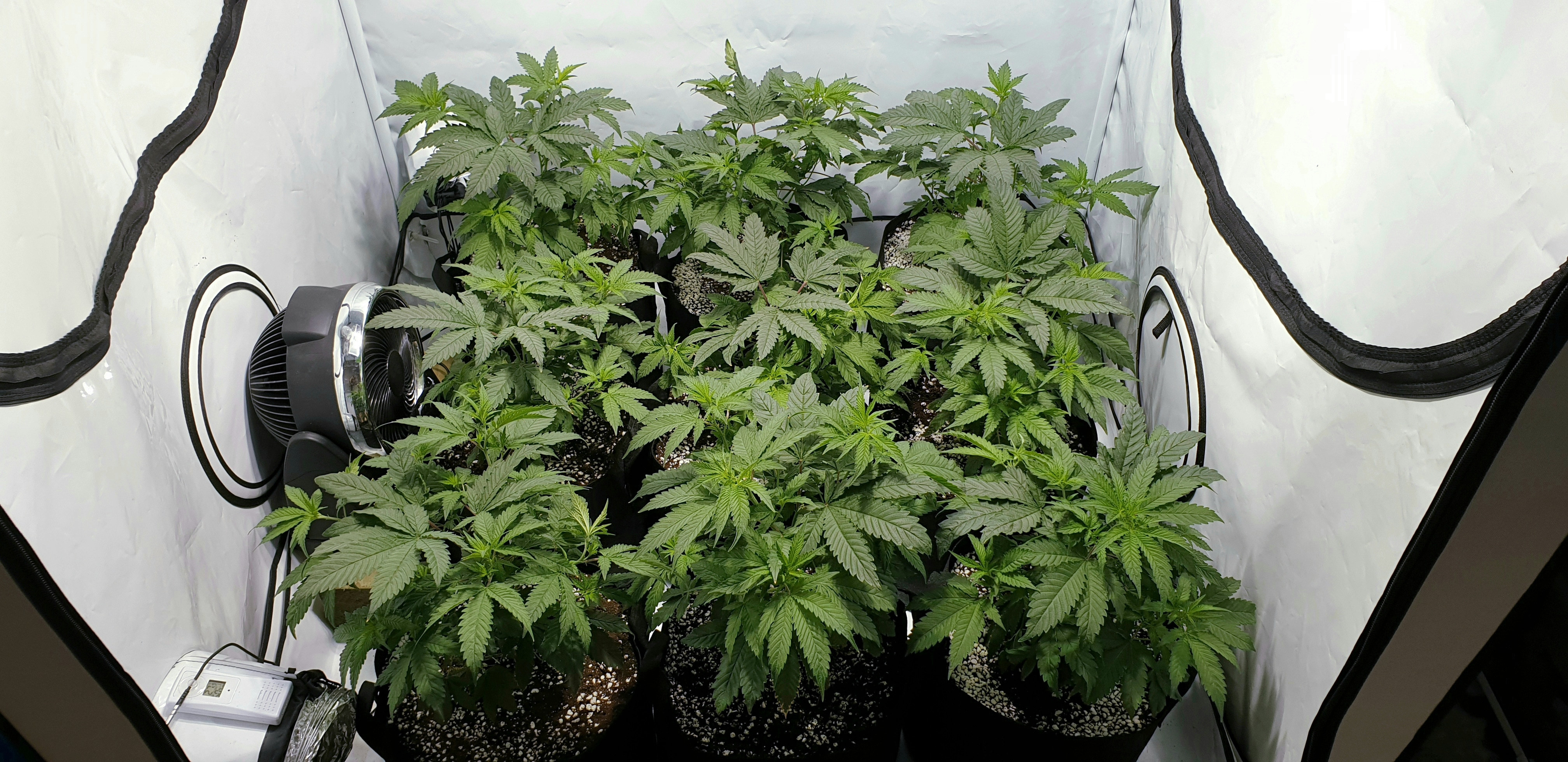 Dr Photons SOG Grow – Grow Journals – Coco For Cannabis Forum